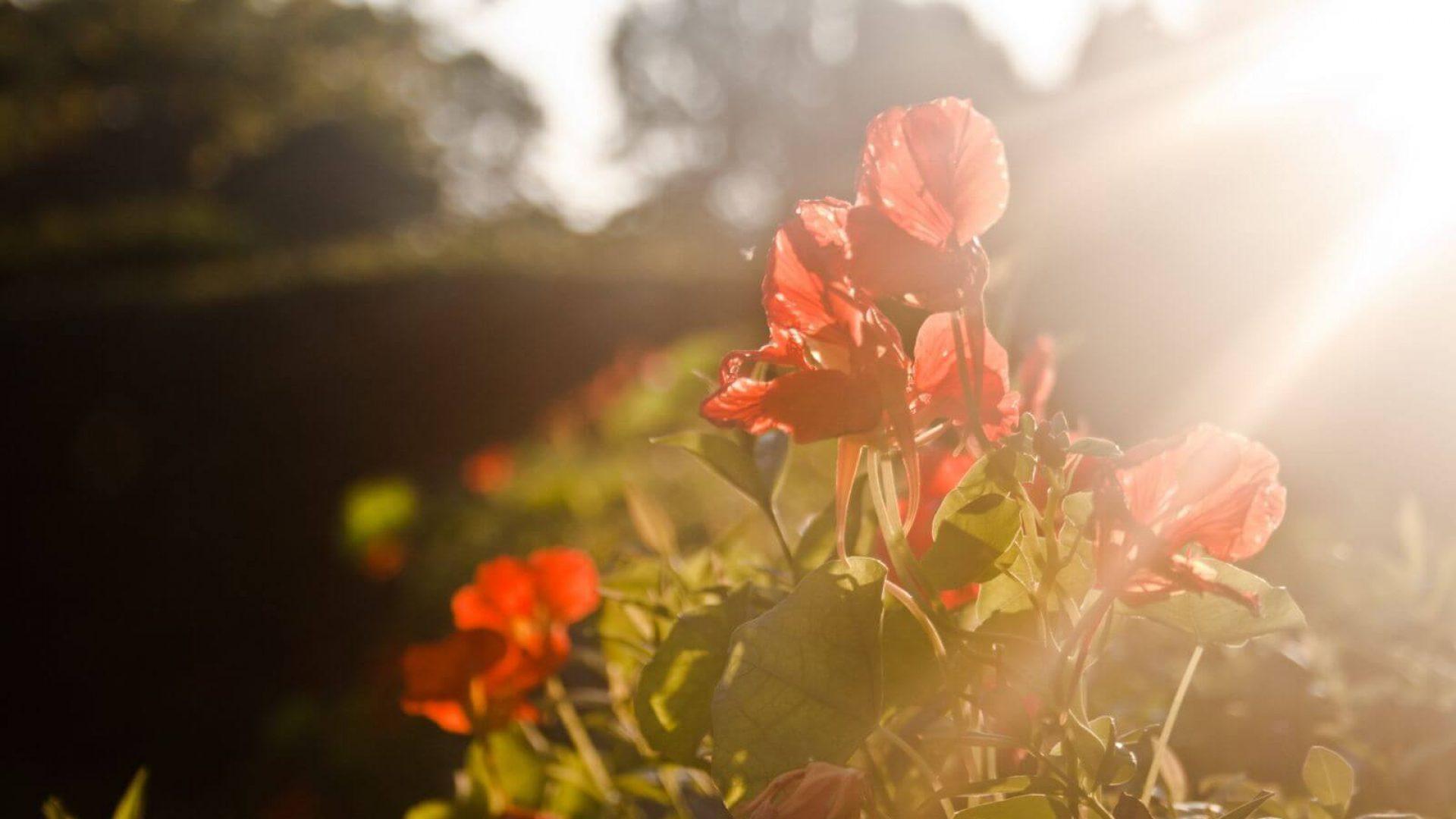 Piękne kwiaty w ogrodzie