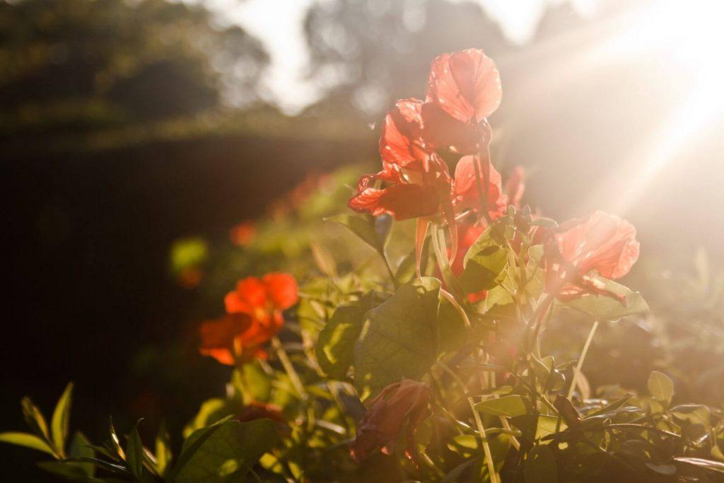 Ogród w blasku słońca